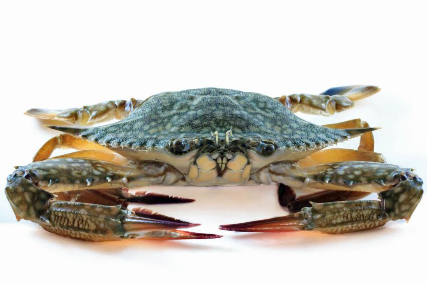 Blue Star Crab Cake Recipe