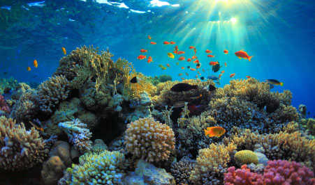 Coral reefs an overview publicscrutiny Images